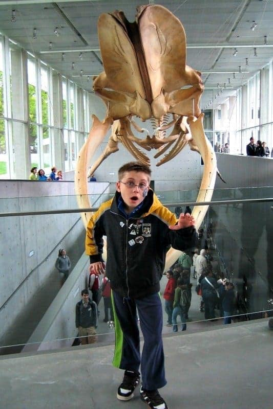 The Beaty Biodiversity Museum has opened at the University of British Columbia in Vancouver. It includes not only a whale, but a whale of a tale. (via thetravellingmom.ca)