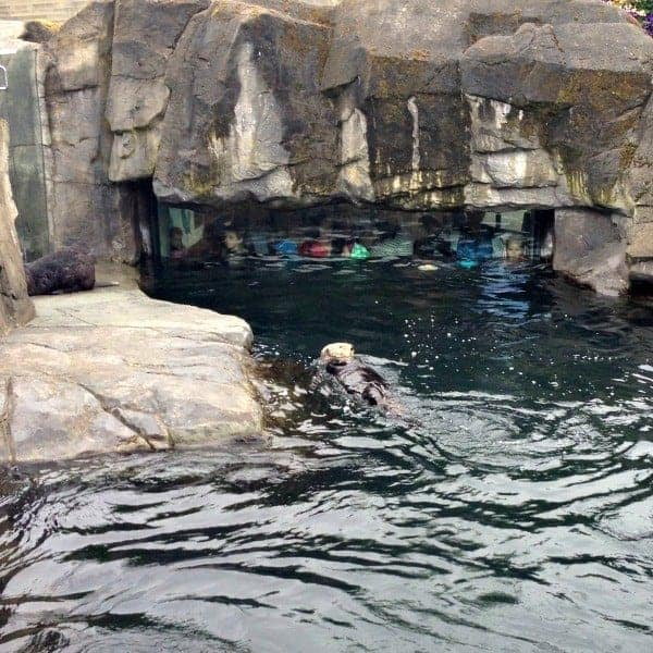 The Vancouver Aquarium in Stanley Park has just completed the largest expansion in its 58-year history. Tips for your family's next Aquarium visit. (via thetravellingmom.ca)