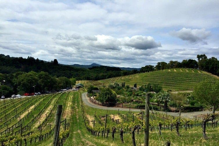 The bucolic rolling hills and vineyards of Sonoma County can be a playground for families with kids. How to enjoy Sonoma County with kids and wine.