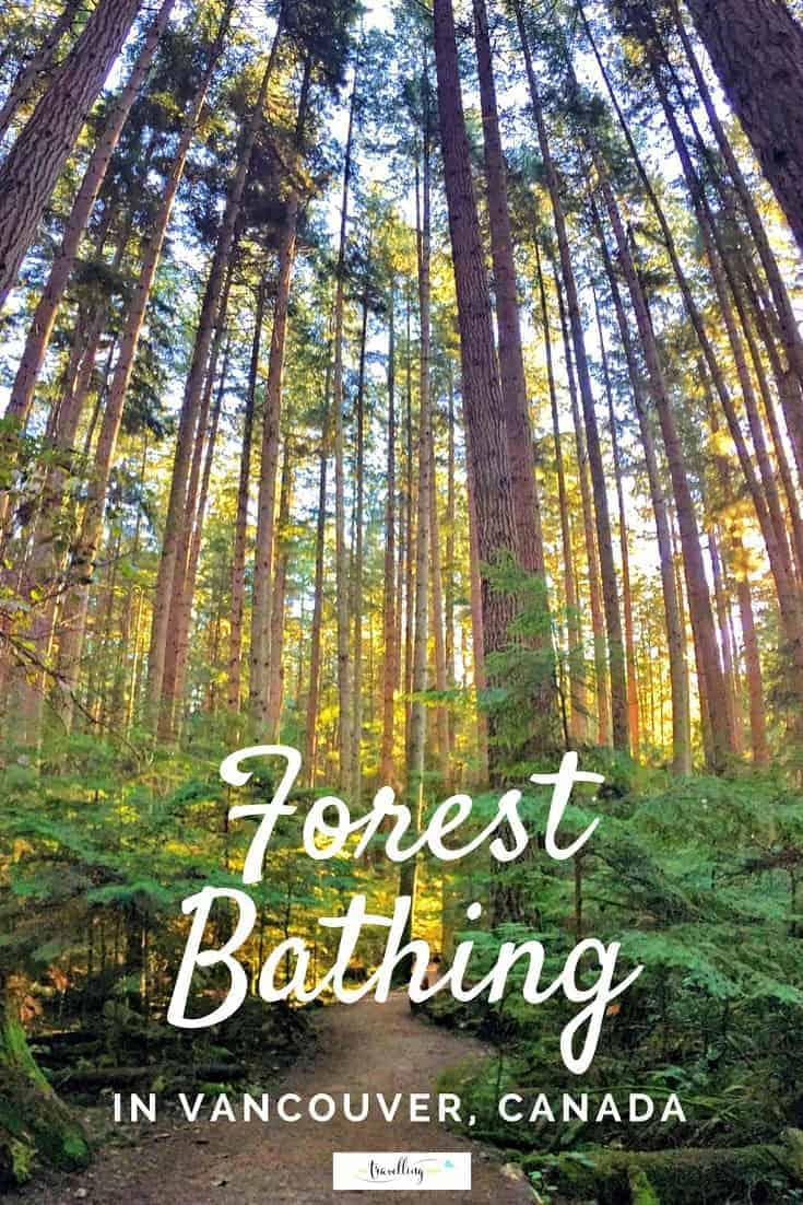 Forest bathing in Vancouver is easy and accessible to health conscious travellers. All you need is a pair of walking shoes and desire to get back to nature.   #forestbathing #vancouver #nature #explorebc #canada