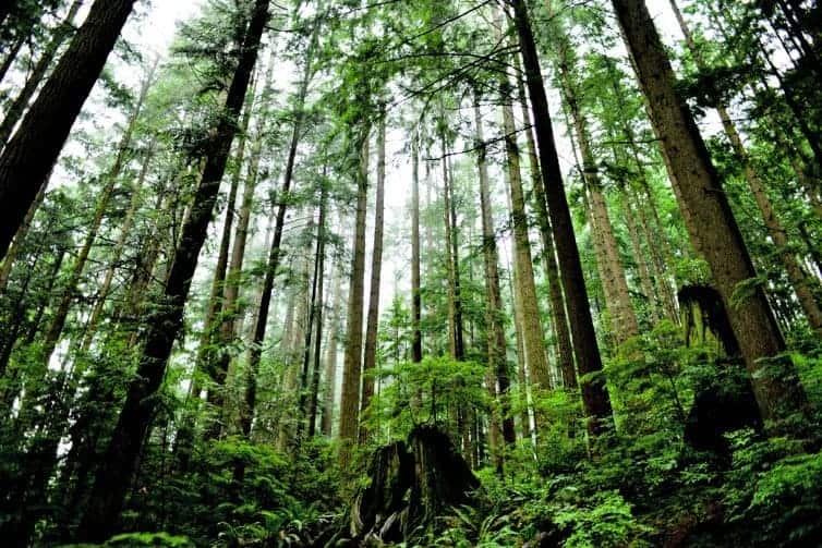 Forest bathing in Vancouver is easy and accessible to health conscious travellers. All you need is a pair of walking shoes and desire to get back to nature.