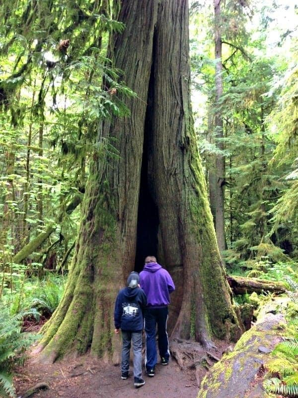 activities for families in parksville