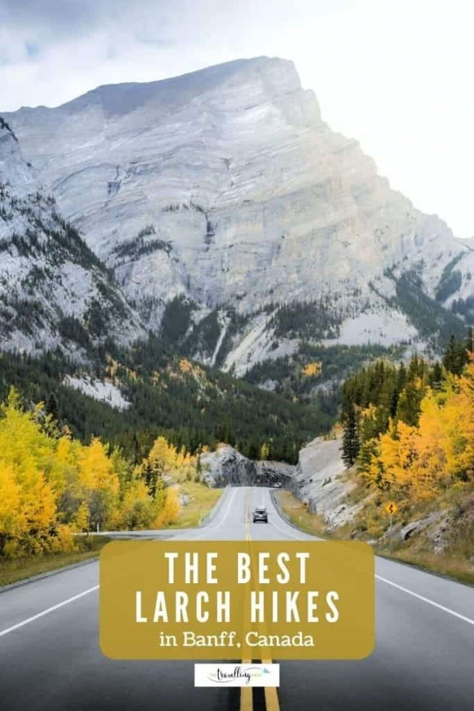 best larch hikes in banff alberta
