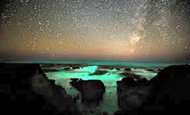 There's something special in the waters off Playa Conchal Costa Rica. Living lights of ocean phosphorescence are tiny marine organisms rarely found.