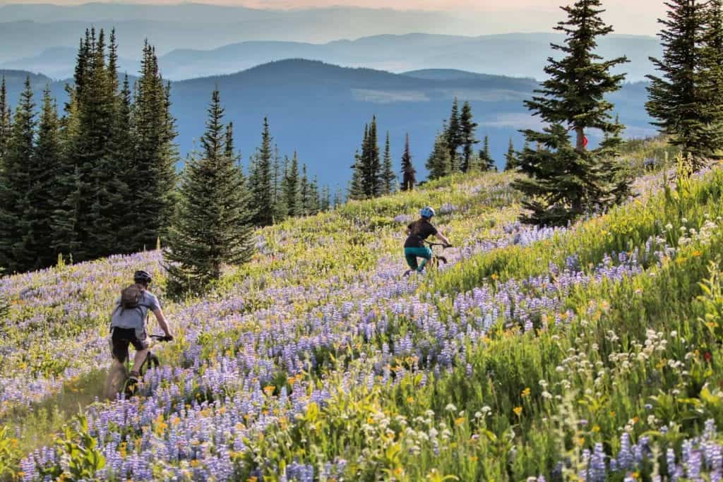 mountain bikers amid wildflowers at sun peaks